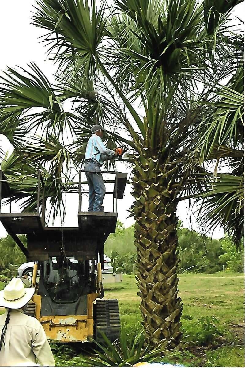 Sabal Palms March 2021