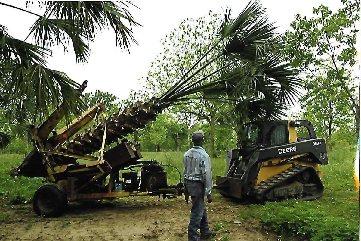 Moving Sabal Palms